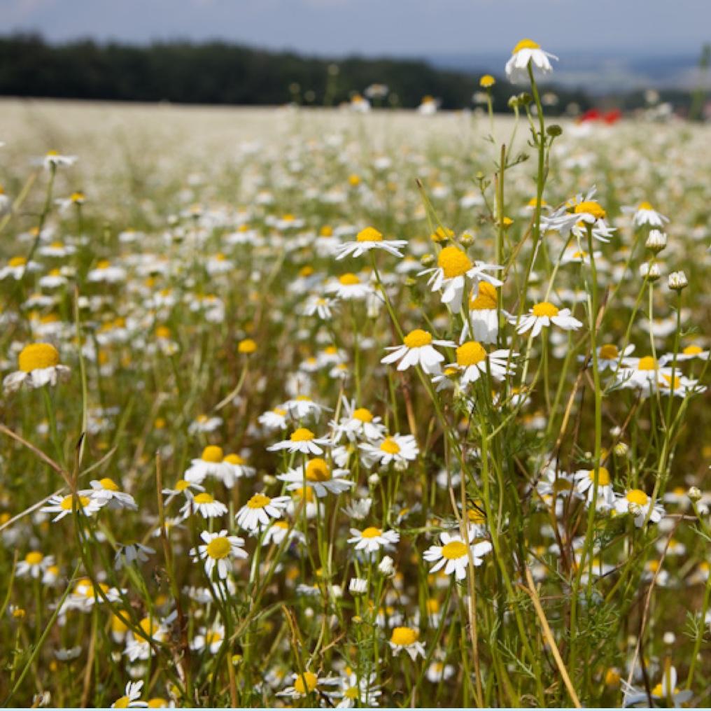 nachhaltigkeit_biodiversitaet