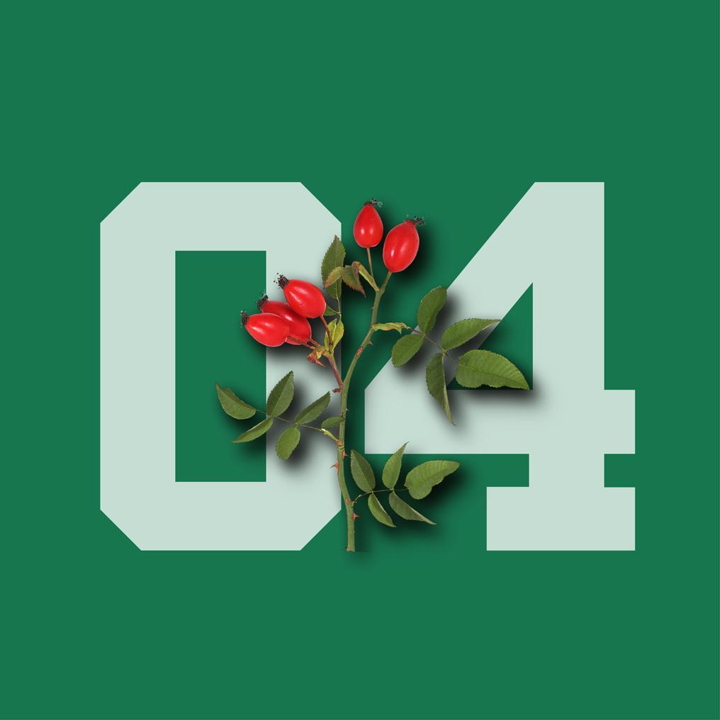 04-rosehip